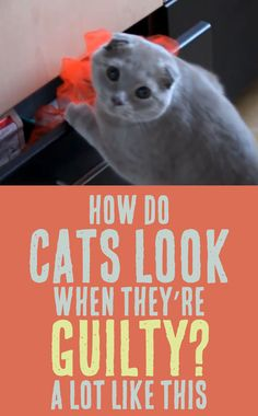 How Do Cats Look When They're Guilty? A Lot Like THIS! :)