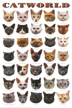 Information about the different breeds of cats.