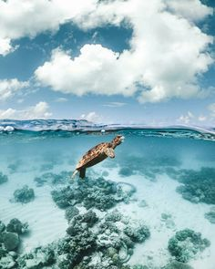 Sea turtle that pays for air - Sea turtle that pays for air . - Sea turtle that pays for air – Sea turtle that pays for air – - Baby Sea Turtles, Cute Turtles, Stuffed Animals, Australia Pictures, Cairns Australia, Australia Winter, Coast Australia, South Australia, Western Australia