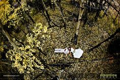 Another bride and groom shot from high up in an aspen tree in Colorado.