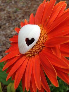 :) cute shell on a Florida flower By: Hailey