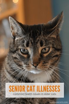 As cats age, they are more susceptible to illness.… http://pawesomecats.com/2016/04/05/common-illnesses-older-cats-likely-experience/