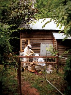 Bee-keeping feature (B-Metro July 2012) Photography by Beau Gustafson