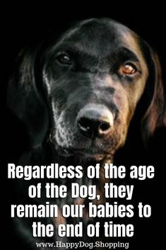 1939 Best Dog / sayings images in 2019 | Dogs, Pets, Dog love