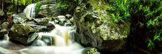 Raw Photography, Photography Gallery, Traditional Landscape, Popular Art, Sunshine Coast, Landscape Photographers, Natural Beauty, Waterfall, Environment