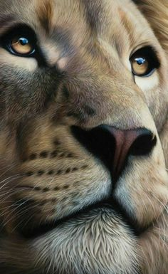 Amazing Lion drawing or painting. Lion of Judah Prophetic art. This is so beautiful! Look at those eyes! Lion King Art, Lion Art, Lion And Lioness, Lion Of Judah, Nature Animals, Animals And Pets, Cute Animals, Wild Animals, Baby Animals
