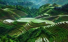 China's rice terraces are absolutely stunning (Lóngshèng County, Guanxi) : pics