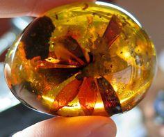 Flower captured in Myanmar amber. Photo by Frederico Barlocher. https://www.facebook.com/GeologyWonders/photos/a.475638922620425.1073741827.475615579289426/525250190992631/?type=3