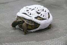 This is just for you Jan! My friend Sharon sent me this pattern for Ian's turtle. lol
