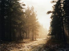 Thetford Forest in Winter