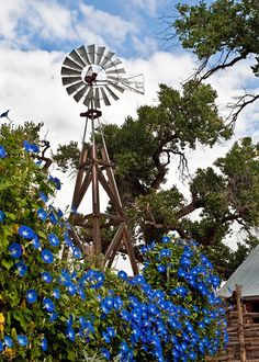 Two Men and a Little Farm: INSPIRATION THURSDAY, WINDMILL WITH FLOWERS. Please visit my website #TrushaDesai.com