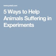 5 Ways to Help Animals Suffering in Experiments