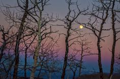 Peaceful autumn moon light picture. Prints are available at reflectedpixel.com