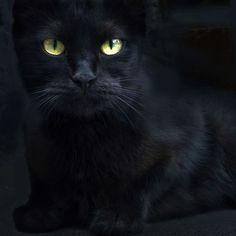 black cat | Very cool photo blog