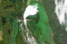 "Metro News: ""Lake Winnipeg declared 'Threatened Lake of the Year'"" Lake Winnipeg, Bloom, Canada, News, Image"