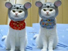 We are not mice we are cats. So everyone can get rid of those giant mouse traps NOW!!!!!!!!!!!!!!!