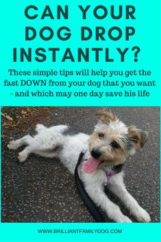 Dog training, new puppy, puppy training, how dogs learn   Little things do matter in dog training - get the small things right and your dog will get it!   FREE EMAIL COURSE   #newpuppy, #dogtraining, #newrescuedog, #puppytraining, #dogbehavior   www.brilliantfamilydog.com