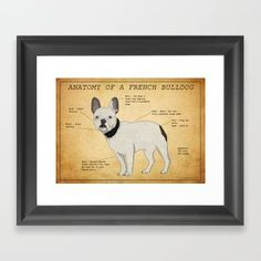 Anatomy Of A French Bulldog Framed Art Print by Rebecca - Vector Black - Artist At Work, Tech Accessories, Framed Art Prints, Unity, French Bulldog, Anatomy, Gallery Wall, Wall Art, Artists