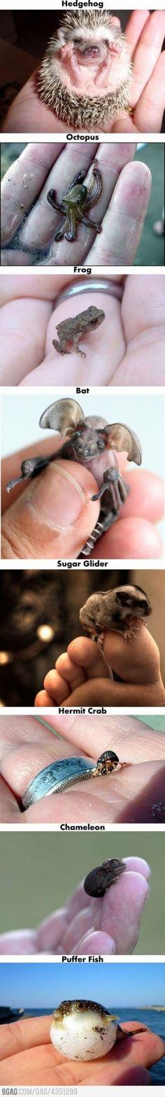 Amazing Little Animals