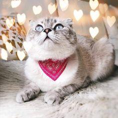 #cat #cats #catsofinstagram #ilovemycat #kittensofinstagram #meow #bestmeow #meowagram #meow_beauties #topcatphoto #kitty #kittylookbook #exellent_cats #cats_of_world #cat_features #elegant_cats #sleep #sleepcat #maisoncat #carriecat #maisonandcarrie #lights #shine Carrie, Cats Of Instagram, Carry On, Kitten, Sleep, Lights, Elegant, Animals, Kittens