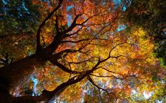 trees autumn Wallpaper