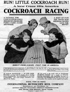 Sunday Fun: Vintage Cockroach Racing Game From International Mutoscope Reel Co. 1940-49