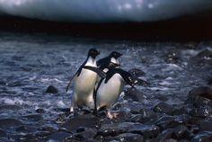 2017-03-27 - penguin wallpaper 1080p windows, #1467558
