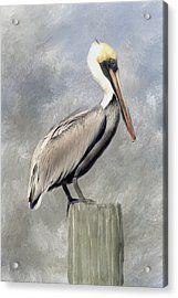Pelican Acrylic Print by Renee Skiba