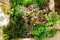 succulent wall planter - Google Search