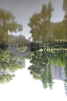 The garden is beautiful & peaceful...the reflection...not so much. (Shanghai Botanical Garden)