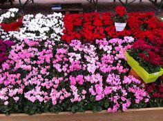 Mercado das flores na Jardiland