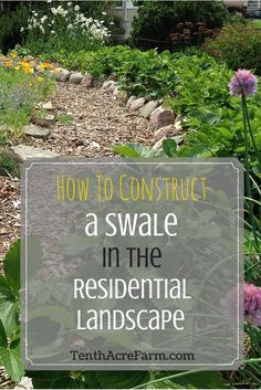 How to Construct a Swale in the Residential Landscape: Capturing water in the landscape is often the easiest and most efficient way to store it. Swales help us do that. Learn how to choose the best site for a swale and how to build one. Landscaping Supplies, Backyard Landscaping, Landscaping Ideas, Residential Landscaping, Landscaping Software, Tropical Landscaping, Ponds Backyard, Drainage Solutions, Drainage Ideas