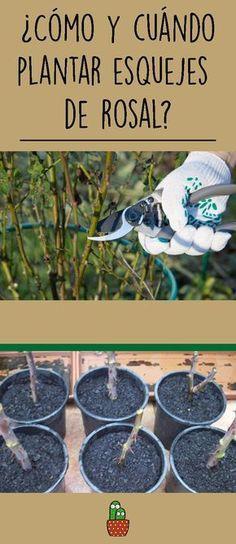 Plantar Rosales, Gerbera, Ranch Life, Growing Plants, Vegetable Garden, Bonsai, Planting Flowers, Cactus, Patio
