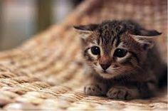 Resultado de imagem para gatinhos filhotes fofos