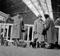 Robert Doisneau  //  Concours  de  chiens, Paris,1953.