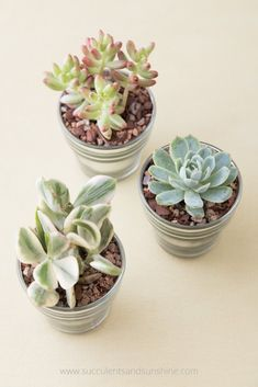 Cheap and Easy DIY Succulent Wedding Favors, can find Favors and more on our website.Cheap and Easy DIY Succulent Wedding Favors, Succulents In Glass, How To Water Succulents, Planting Succulents, Indoor Succulents, Succulent Cuttings, Succulent Soil, Propagating Succulents, Succulent Wedding Favors, Unique Wedding Favors