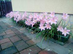 Outdoor Gardens, Decor, Gardening, Bulbs, Balcony, House, Garden, Beautiful Flowers, Bonito