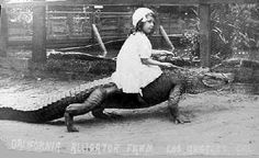 Crazy Photos, Strange Photos, Old Photos, Vintage Photos, Vintage Florida, Old Florida, Alligators, Crocodiles, Retro Signage