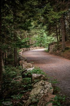 Carriage Roads Acadia National Park Maine | by Susan Garver Photography