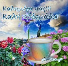 Good Morning Image Quotes, Beautiful Flowers, Gifs, Google, Decor, Decoration, Decorating, Presents, Deco