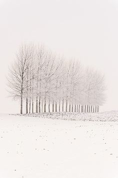 Snow abstract - Sint-Laureins, Belgium by Bart Heirweg