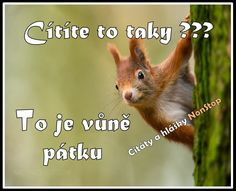 To je vůně pátku Lol, Funny, Facebook, Hilarious, Entertaining, Fun