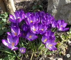 Een foto uit de tuin van Ingrid knaepen