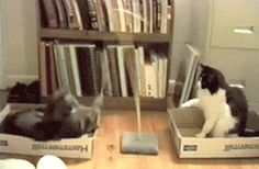 I love cat gifs and dog gifs. Funny Cats, Cute Cats, all the time.Big animals gif lover too. Funny Cat Videos, Funny Cats, Funny Animals, Cute Animals, Smart Animals, Pet Videos, Animal Funnies, Cool Cats, I Love Cats