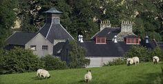 Glendronach ist eine Brennerei in den schottischen Highlands, die vor allem Fans von sherryfassgereiften Whiskys regelmäßig begeistern kann. Die Brennerei liegt im Aberdeenshire, inmitten von Gerstenfeldern. Nur das typische Pagodendach lässt schon von Ferne erkennen um was für eine Art Gebäudekomplex es sich hier handelt. Zur Brennerei gehört auch ein Herrenhaus, das mit Kräutergarten und Blumenbeeten wie aus dem Bilderbuch wirkt.