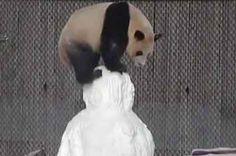11 Happy Little Things To Make You Smile This Week. WATCH THE PANDA!! It is magical all by itself:)