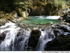 Opal Creek Ancient Forest is (in my humble opinion) one of the most beautiful places on earth.