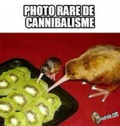 42 ideas funny baby pictures humor hilarious laughing for 2019 Animal Jokes, Funny Animal Memes, Funny Relatable Memes, Funny Facts, Funny Animals, Baby Animals, Good Morning Funny Pictures, Very Funny Pictures, Funny Images
