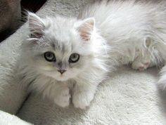 Kediler mutlu olduklarında dokundukları yeri yoğurmaya başlar :)