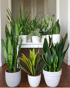 This simple herb hanging idea uses a steel pipe, rope, and glazed planters to make a stunning indoor garden display. Sansevieria Plant, Sansevieria Trifasciata, Succulents Garden, Garden Plants, Planting Flowers, Gardening Vegetables, Best Indoor Plants, Indoor Garden, Outdoor Plants